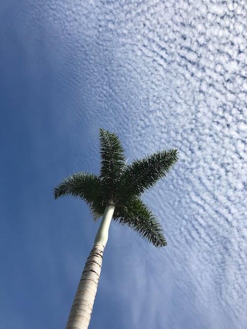 Δωρεάν στοκ φωτογραφιών με ανάπτυξη, γαλάζιος ουρανός, γραφικός, δέντρο
