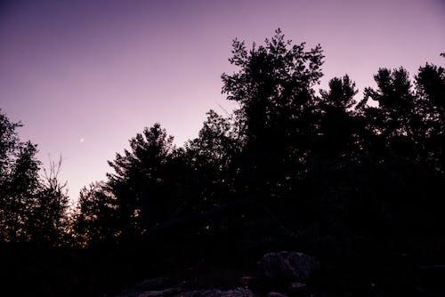 Kostnadsfri bild av halv måne, himmel, kanada, kändisar