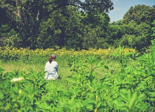 Gratis stockfoto met akkerland, bloemen, boerderij, boerenbedrijf