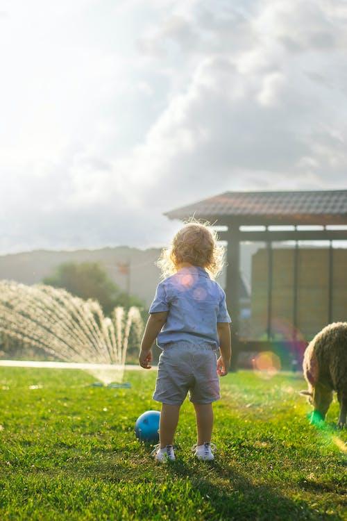 Kostnadsfri bild av barn, dagsljus, ensam, fritid