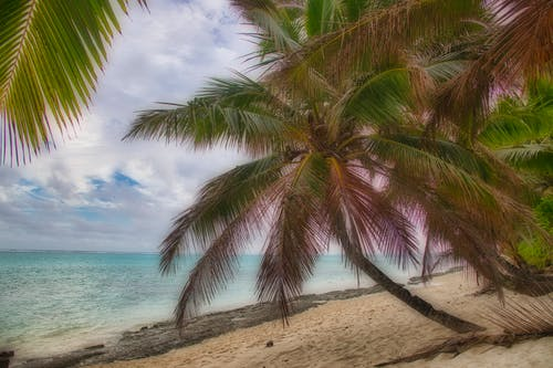 Ilmainen kuvapankkikuva tunnisteilla palmupuut, pilvet, rantahiekka