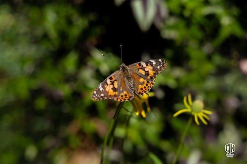 Бесплатное стоковое фото с detroithives, бабочка, бабочки, детройт ульи