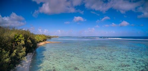 hava fotoğrafçılığı, mavi gök, mercanlar, Palmiye ağaçları içeren Ücretsiz stok fotoğraf