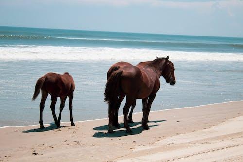Foto profissional grátis de #desafioaoarlivre, #outdoorchallenge, água, areia