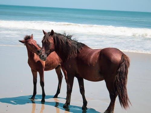 Základová fotografie zdarma na téma #outdoorchallenge, divocí koně, holka, hrad z písku
