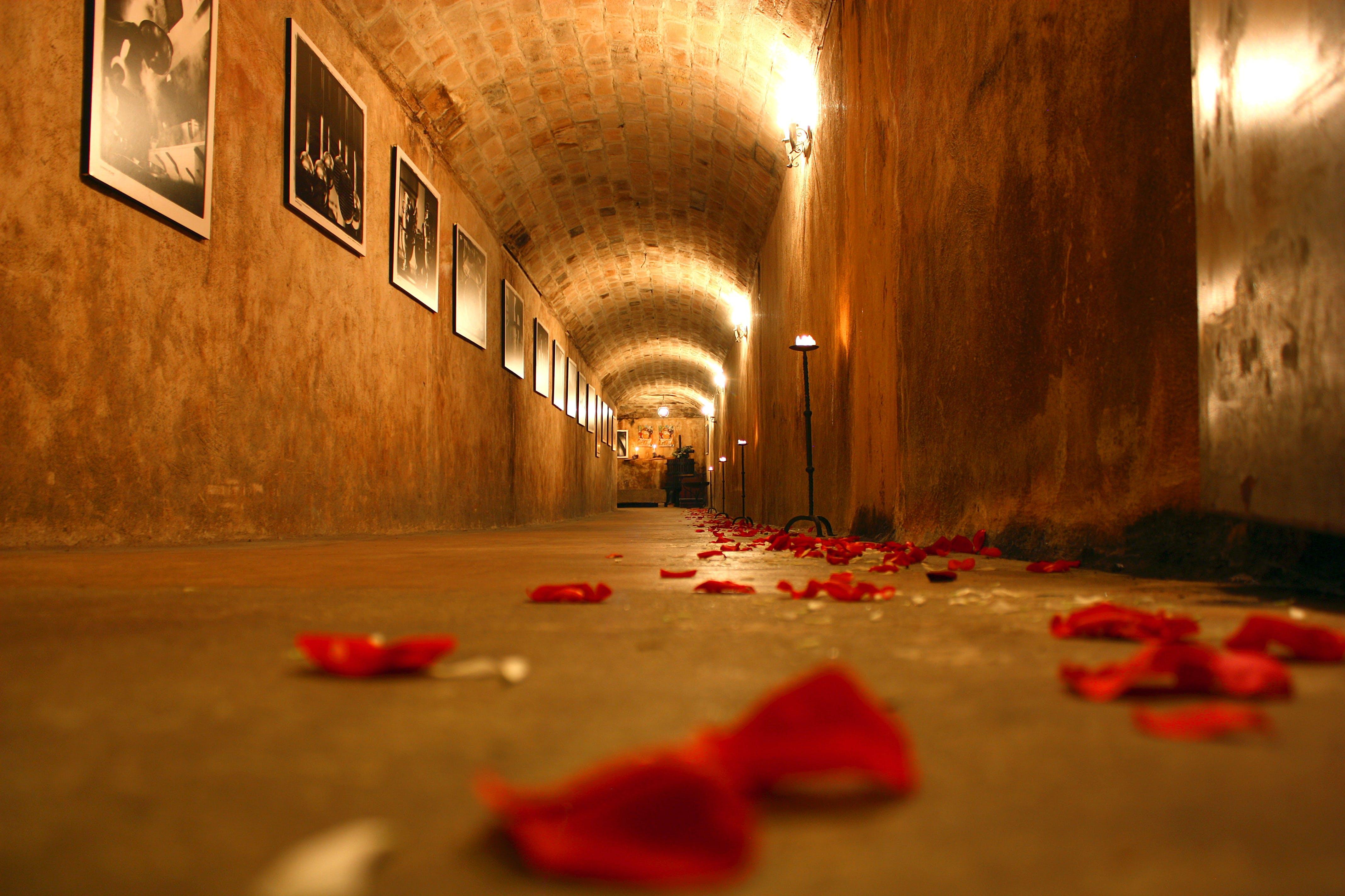 Red Flower Petals on Hallway