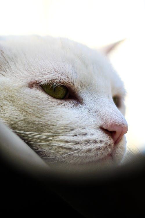 50mm, キヤノン, ネコ, 動物の無料の写真素材