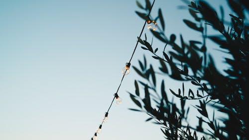 Gratis stockfoto met belicht, bladeren, blauwe lucht, buiten