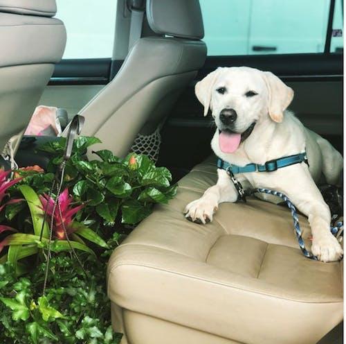 Free stock photo of cute dog, dog, dog lover, florida