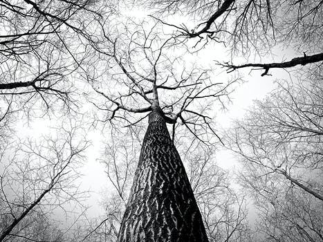 Free stock photo of black and white branches tree high