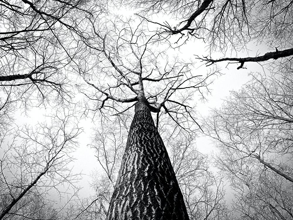 Worm's Eye View Photography of Naked Tree
