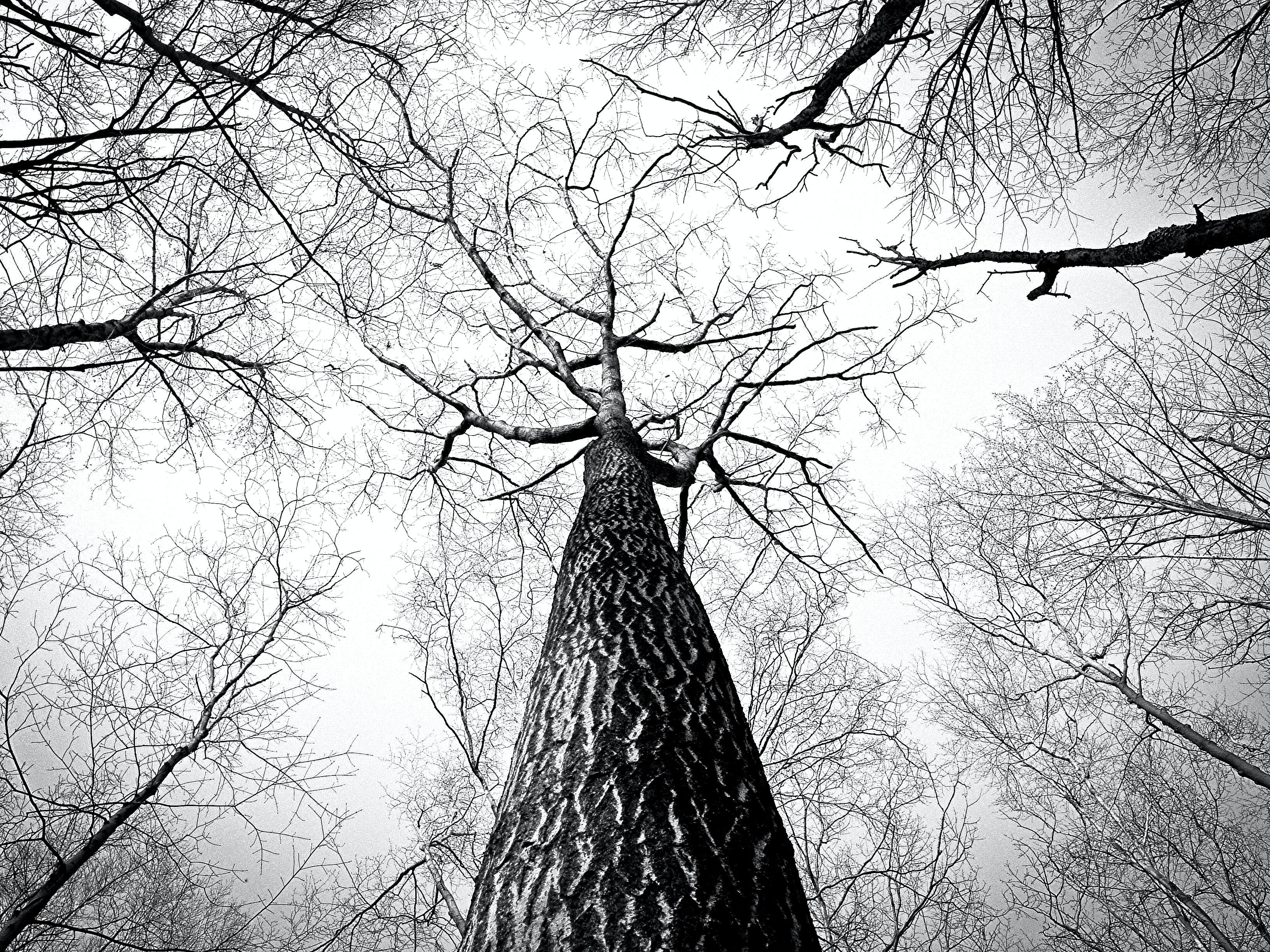 Pics white and black