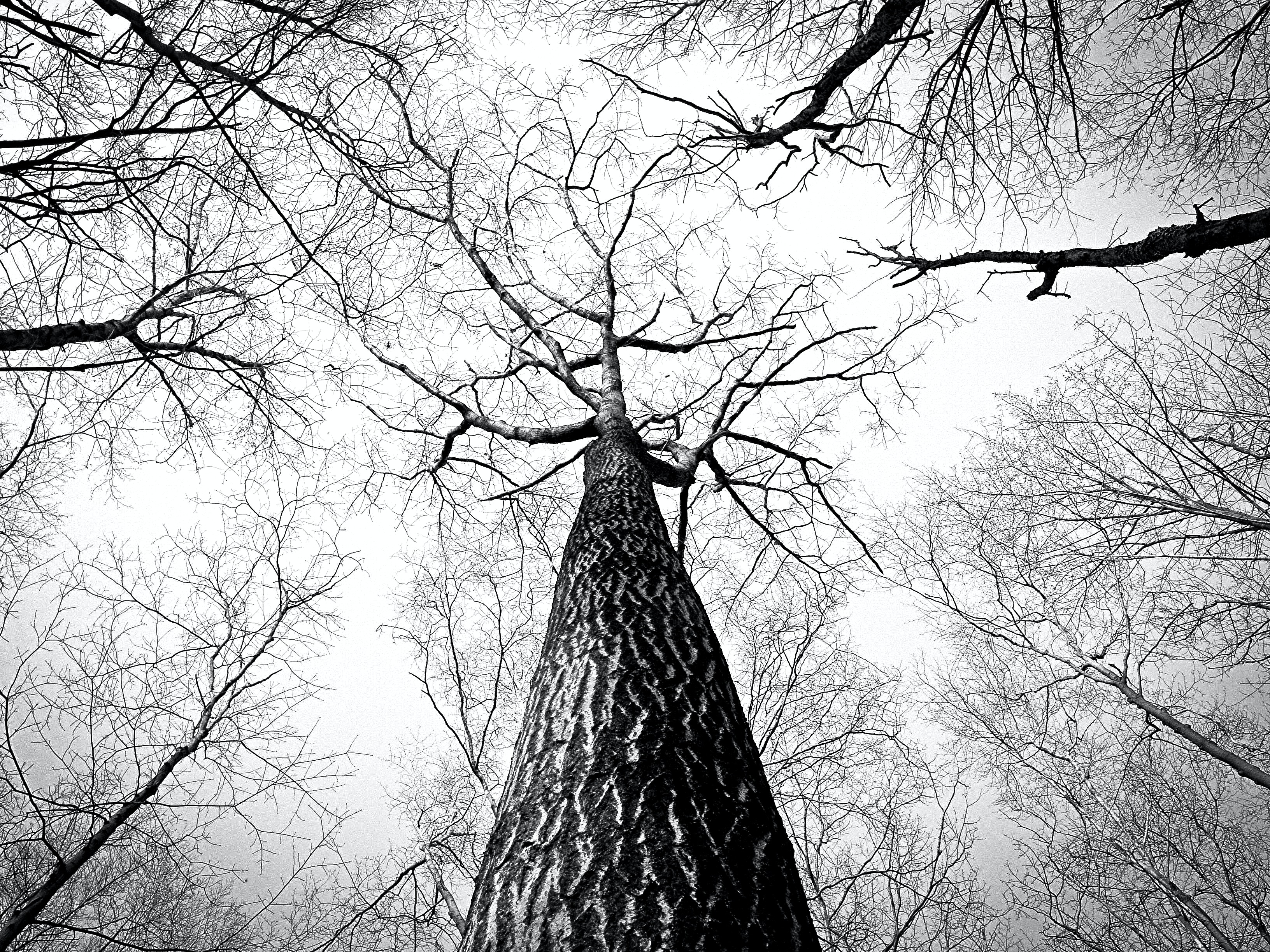 Worms Eye View Photography Of Naked Tree Free Stock Photo