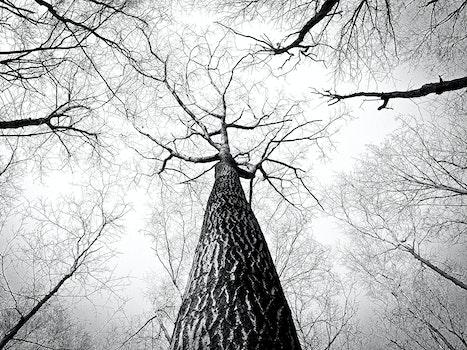 Kostenloses Stock Foto zu schwarz und weiß, äste, baum, hoch
