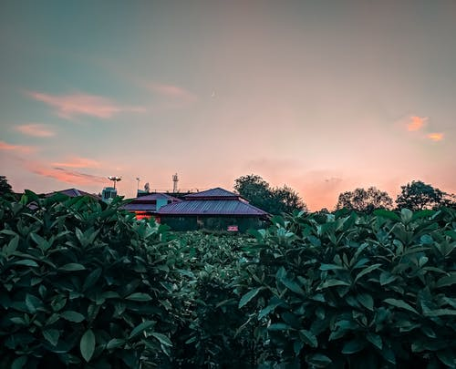 Gratis arkivbilde med grønn, solnedgang