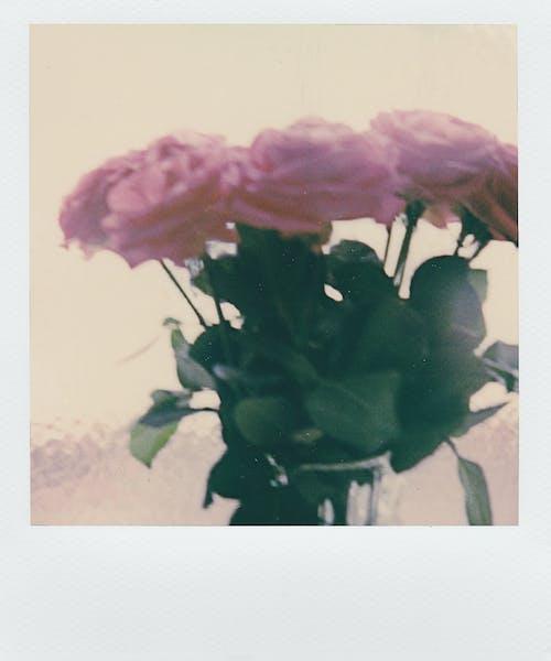 Безкоштовне стокове фото на тему «букет, ваза, великий план, запашний»