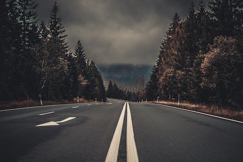 Imagine de stoc gratuită din arbori, asfalt, autostradă, bandă