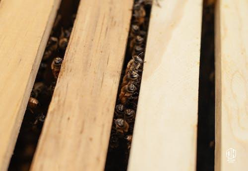 Бесплатное стоковое фото с detroithives, urbanbeekeeping, город, городское пчеловодство