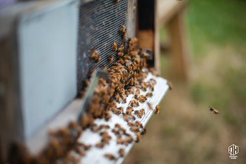 Δωρεάν στοκ φωτογραφιών με detroit κυψέλες, detroithives, forager bee, αστική μελισσοκομία