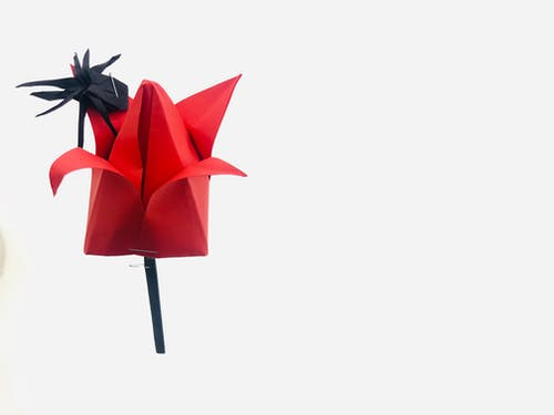 Free stock photo of origami, paper, paper flower, paper spider