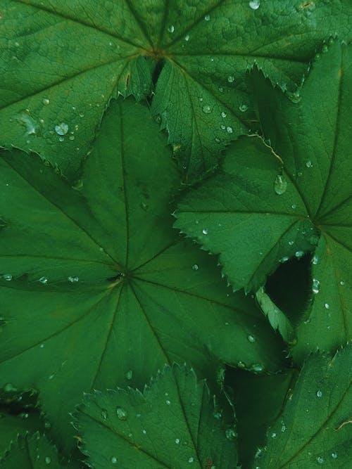 Kostenloses Stock Foto zu blätter, feuchtigkeit, grün, grüne blätter