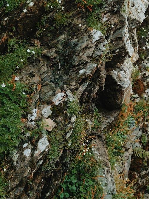 Ilmainen kuvapankkikuva tunnisteilla jäkälä, kasvit, kasvu, kivet