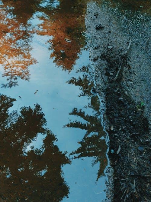 下落, 反射, 土, 塵土 的 免费素材照片