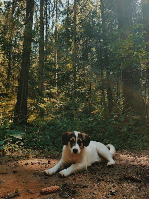 คลังภาพถ่ายฟรี ของ กลางวัน, กลางแจ้ง, การถ่ายภาพสัตว์, ต้นไม้