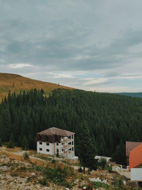 Ingyenes stockfotó domb, építészet, erdő, fák témában