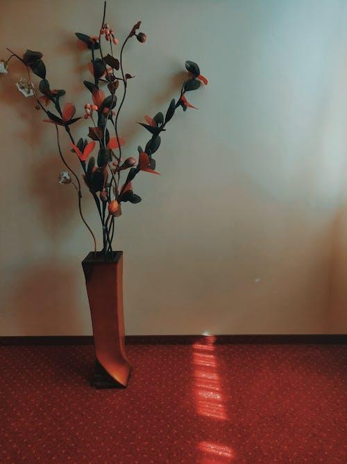 büyüme, çiçek, dekorasyon, dekoratif bitki içeren Ücretsiz stok fotoğraf