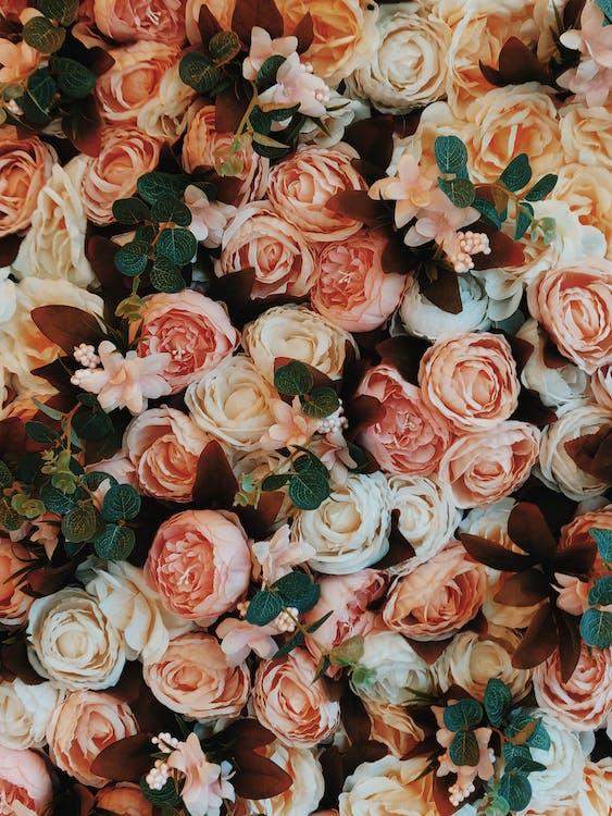 bagus, berkembang, bunga-bunga