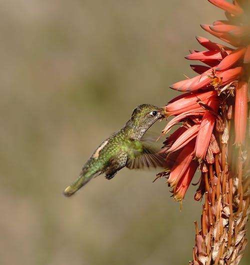 Foto profissional grátis de animais selvagens, animal, ave, aviário