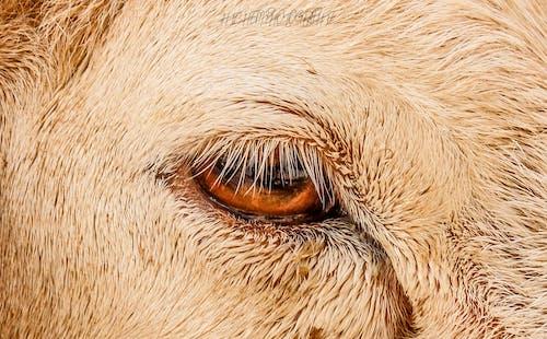 Free stock photo of 2019, animal, animal photography, animal portrait