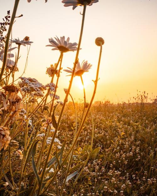 Foto stok gratis alam, bidang, bidang bunga, bunga-bunga
