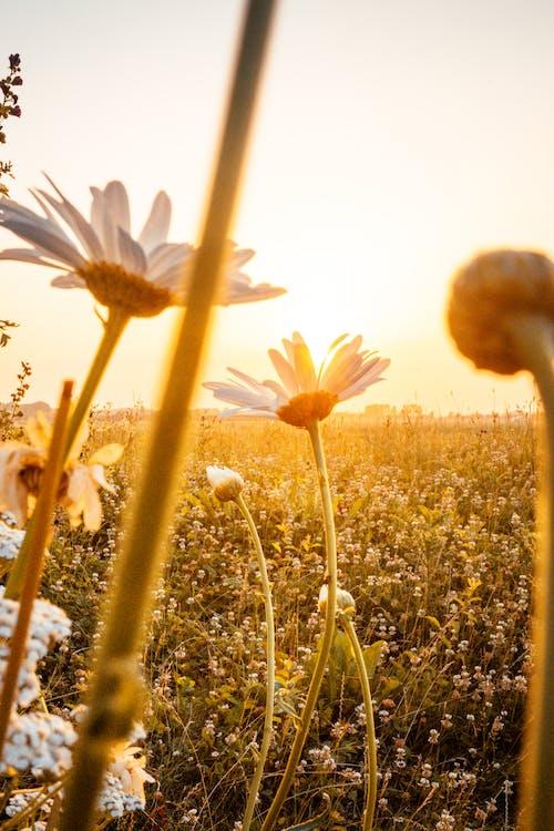 Flores De Pétalos Blancos En Un Día Soleado