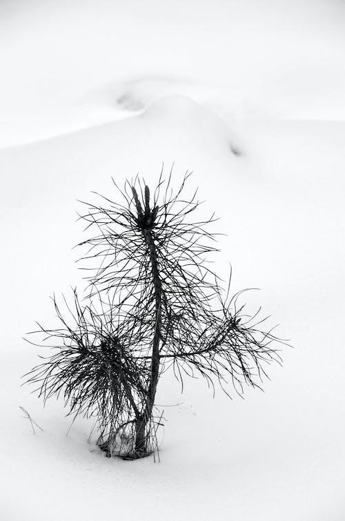 Δωρεάν στοκ φωτογραφιών με ασπρόμαυρο, γραφικός, γυμνό δέντρο, εργοστάσιο