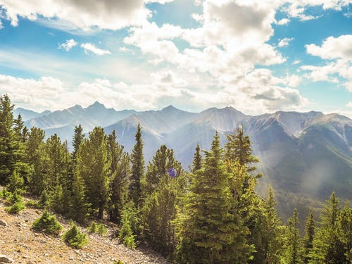 Imagine de stoc gratuită din arbori, Canada, canadian, cer