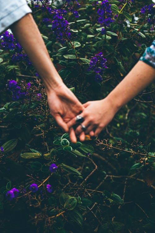 Immagine gratuita di amore, anelli, bellissimo, campo