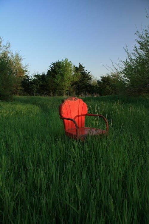 Foto d'estoc gratuïta de a l'aire lliure, alba, arbres, art