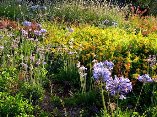 Ilmainen kuvapankkikuva tunnisteilla kukkaketo, kukkaniitty