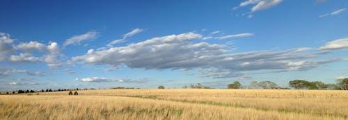 Foto d'estoc gratuïta de ample, panorama, rural