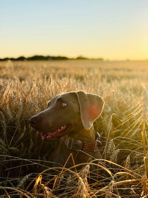 가을, 개, 개의, 경치의 무료 스톡 사진