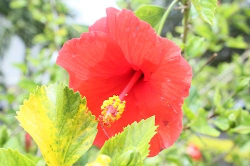 güzel çiçek içeren Ücretsiz stok fotoğraf