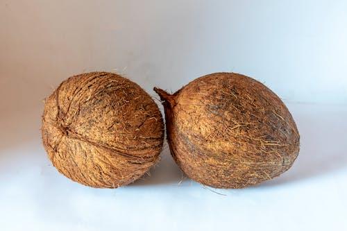 椰子 的 免费素材照片