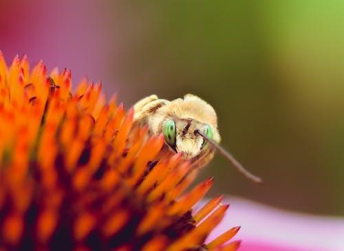 Ilmainen kuvapankkikuva tunnisteilla hyönteinen, kuoriainen, luonto, makro