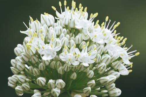 Free stock photo of bloom, bud, garden, macro
