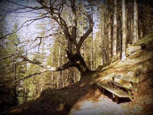 Ilmainen kuvapankkikuva tunnisteilla patikointi, puu, puupenkki, pyökki