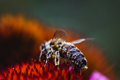 Free stock photo of bee, bug, garden, insect