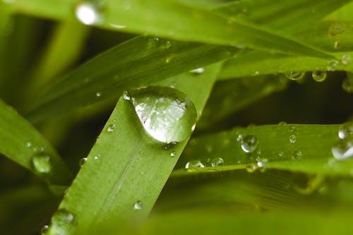 Free stock photo of drops, grass, nature, rain