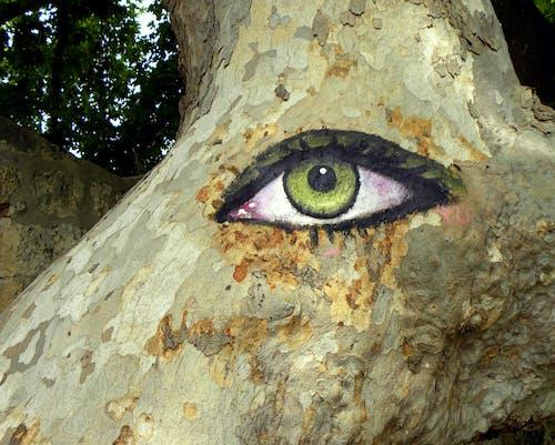 Ilmainen kuvapankkikuva tunnisteilla Eukalyptus, luonto, luontoäiti, puu